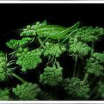 Кузнечик на зеленом цветке