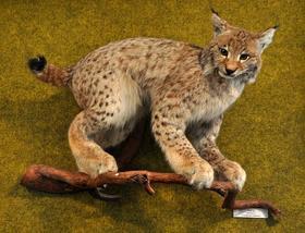 Как живется Музею леса в Челябинске?