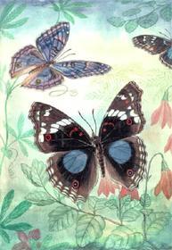 Бабочки мира «голосуют» за Разбойникова