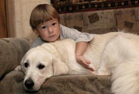 На Южном Урале детей с особенностями развития лечат собаки