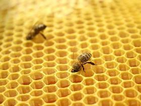 Где зимуют уральские пчёлы?