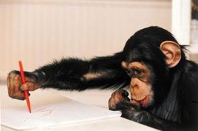 В челябинском зоопарке сразу три звериные четы обзавелись малышами